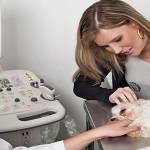 blog-ultrassonografia